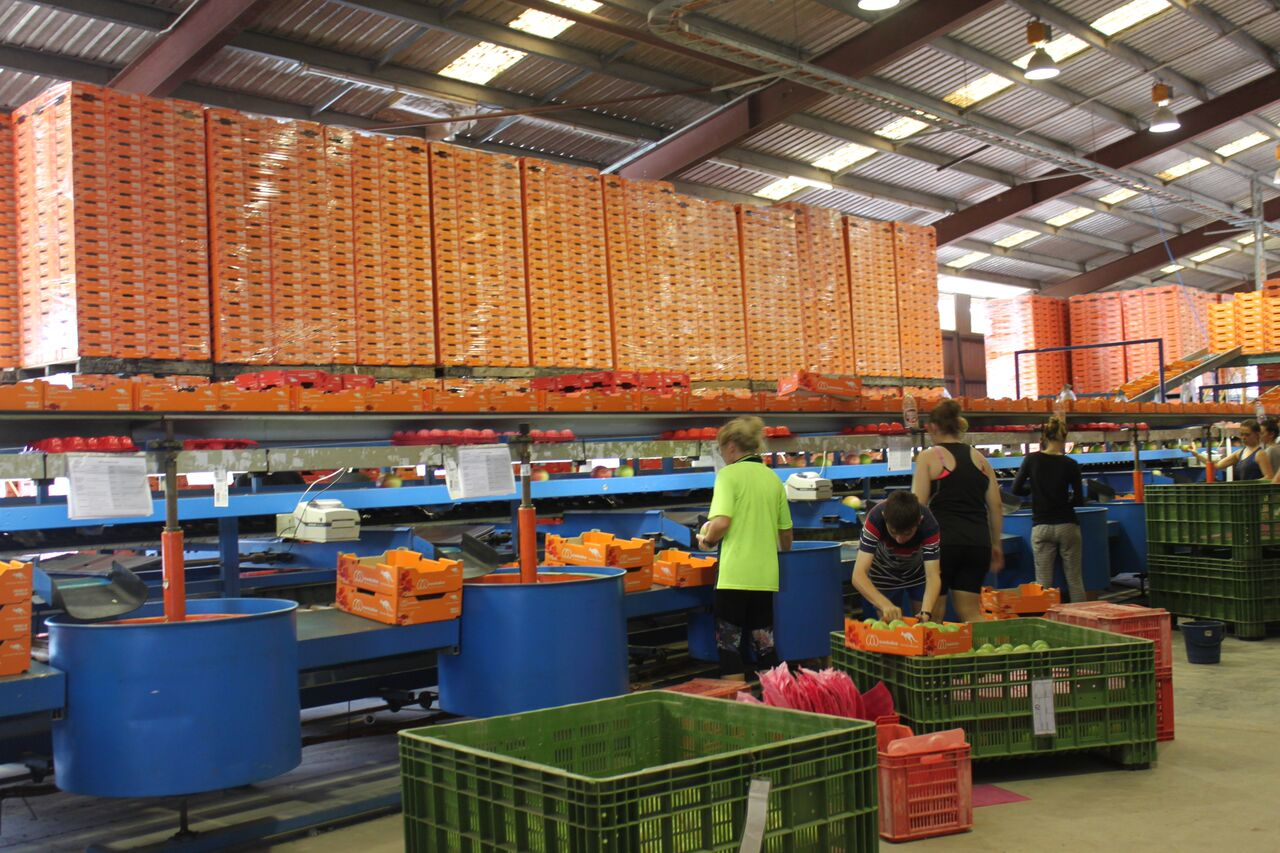 Air route to Middle East boosts Australian fruit & veg exports
