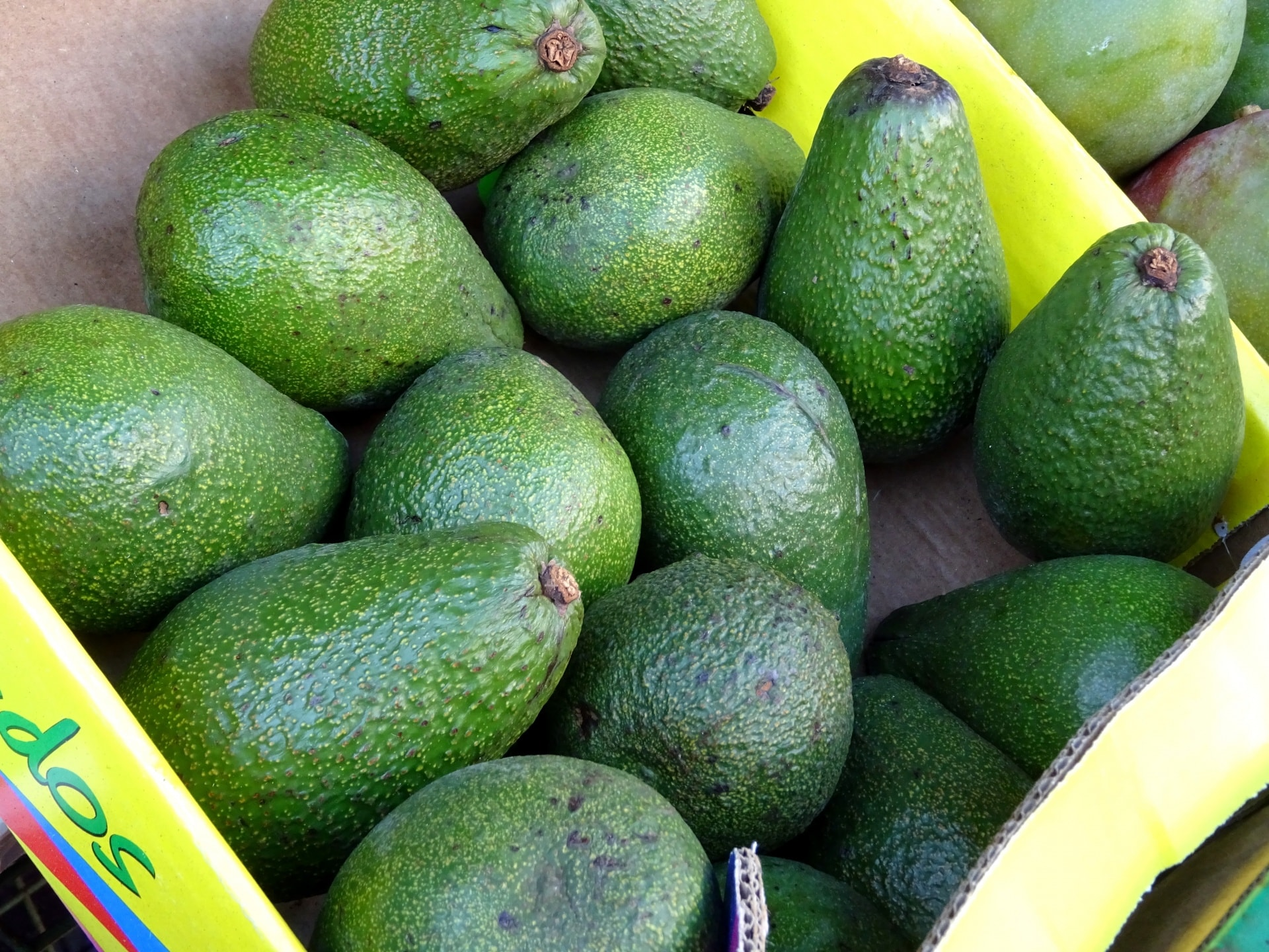 New Zealand - Spotlight on quality avocado to Australia